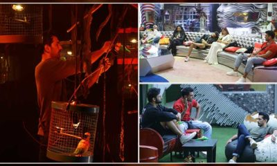 Bigg Boss 14 Written Updates, Day 51: The nominations process creates new rifts between contestants | Bollywood Bubble